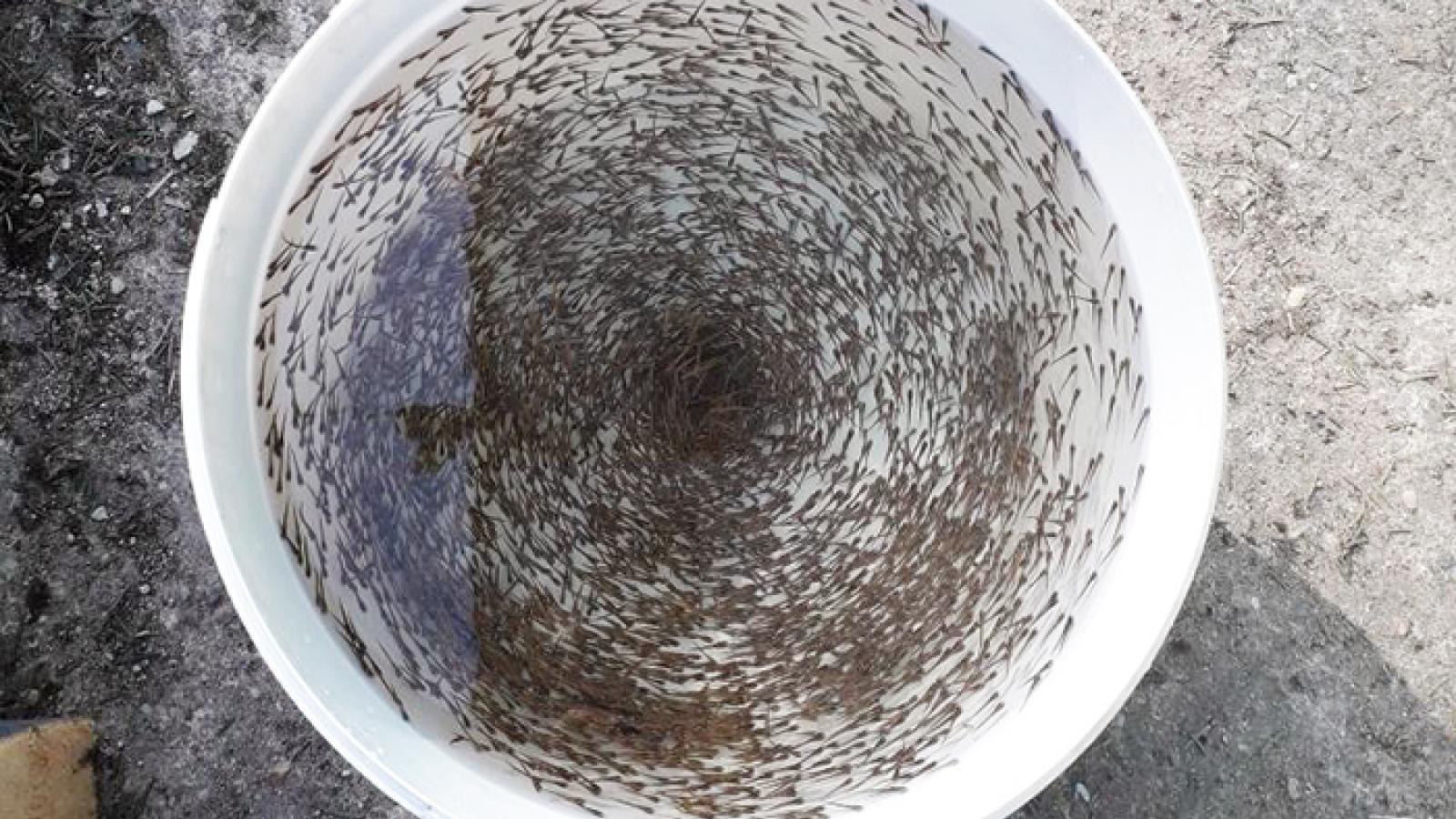 6 миллионов личинок рыбы семейства лососевых выпустили в вологодскую реку