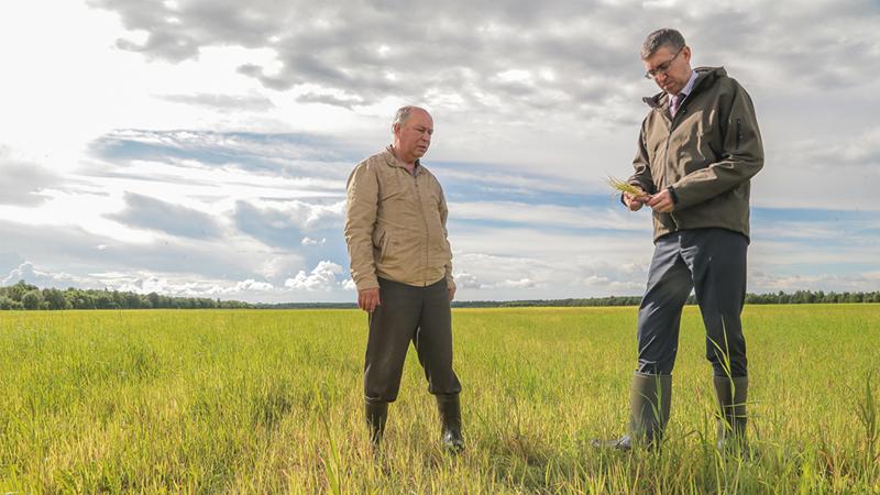 На Вологодчине введут режим ЧС по сельскому хозяйству