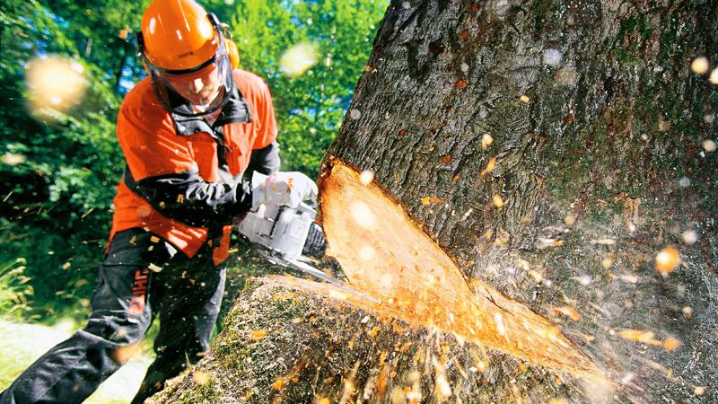 В Никольске во время лесозаготовительных работ на мужчину упало дерево