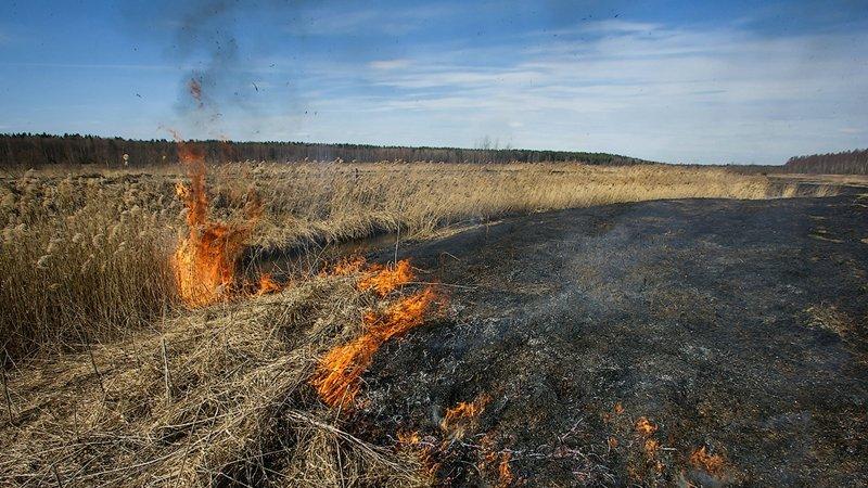 В Вологодском районе загорелась сухая трава