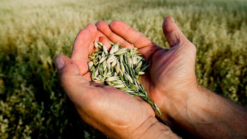 Сельхозпроизводители из Вологды получили дополнительное финансирование