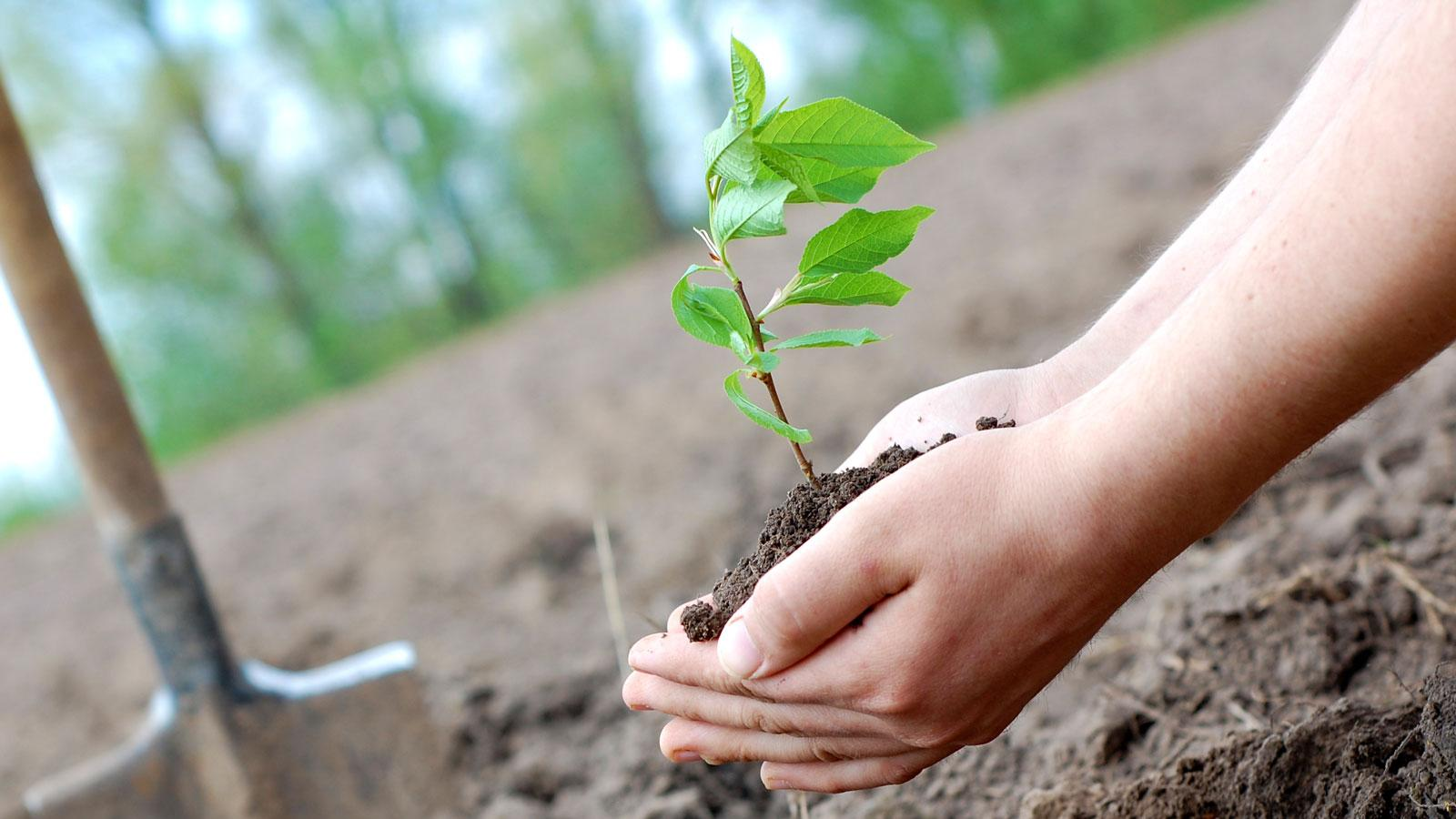 Бесплатные саженцы деревьев смогут получить вологжане