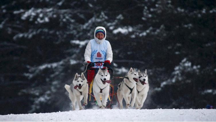 На Вологодчине пройдёт Этап Кубка мира по ездовому спорту