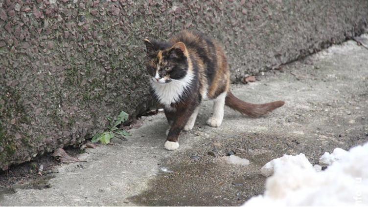 Череповецкие работники ЖКХ замуровали животных в подвале