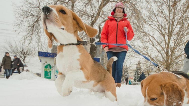 В центре Вологды оборудуют площадку для выгула собак