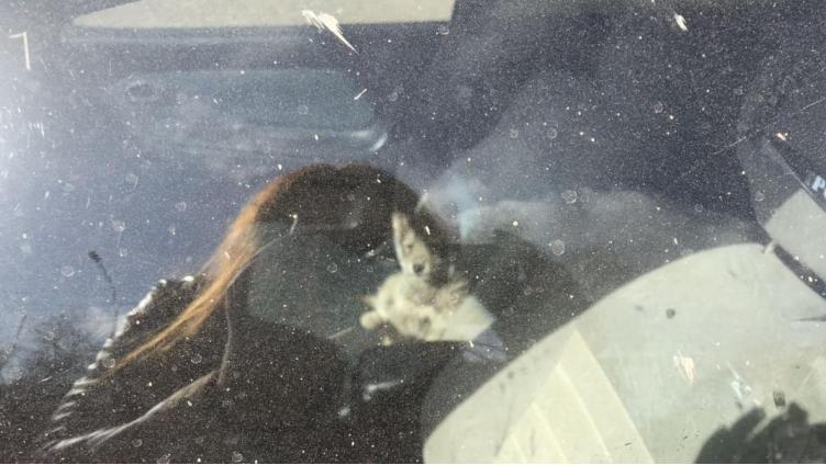 В Вологде спасли щенка, который сидел в запертой машине