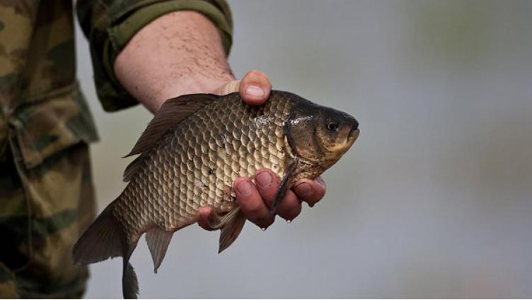 На Вологодчине введен запрет на рыбалку