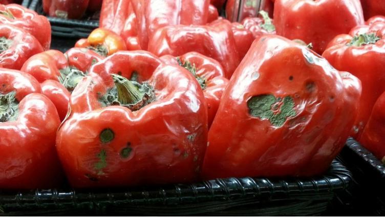 Роспотребнадзор сообщает: более 100 кг овощей в вологодских магазинах испорчены