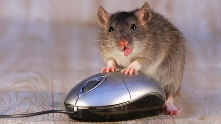 Офисная крыса