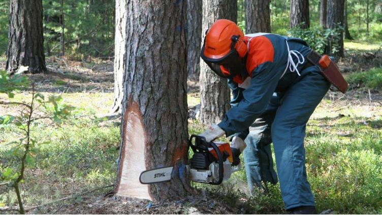 В Шекснинском районе вальщика леса зарезали на работе