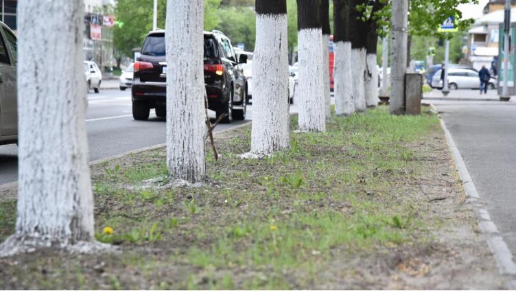 В Вологде снова проведут озеленение газонов