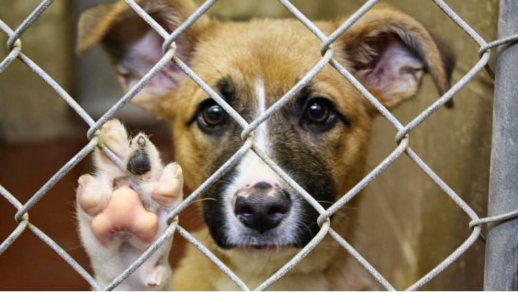 В Череповце выделили деньги на содержание бездомных животных