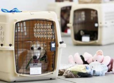 Увеличилось количество поездов с услугой перевозки домашних животных без сопровождения