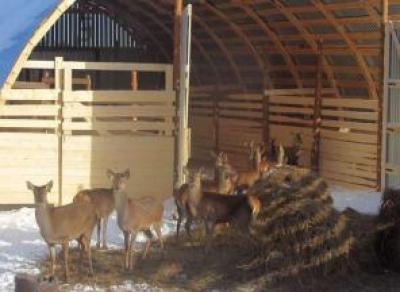 В Вологодской области появится еще один зоопарк