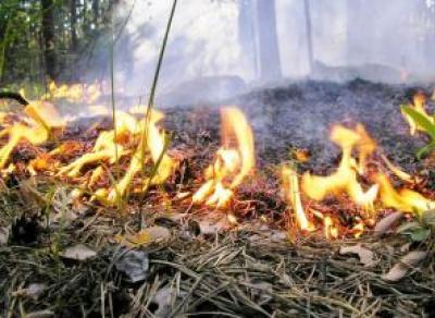 В Вологодской области объявлен пожароопасный период