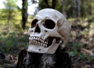 В Вологодской области в лесу нашли человеческие останки