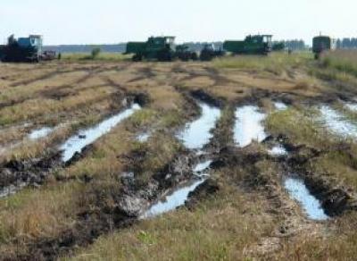 На Вологодчине катастрофа с урожаями