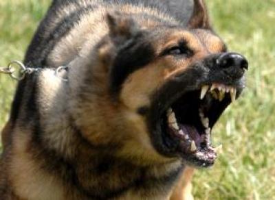 Овчарка-убийца: вологжанин оштрафован за смерь чужого питомца