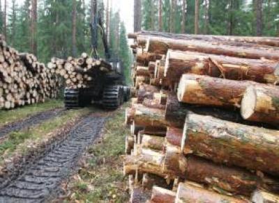 Вологда станет площадкой международного лесного форума