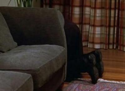 «Резиновый» вор прятался от полиции за диваном