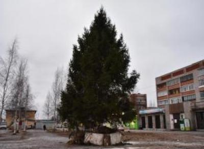 В Лосте уже поставили новогоднюю ель