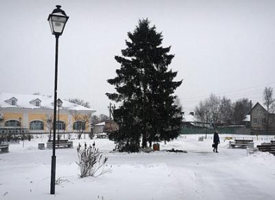 В Вологде установили 14 новогодних елей