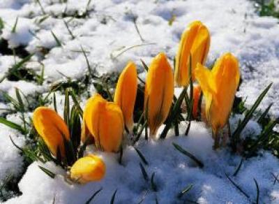 Синоптики обещают аномальное тепло в начале весны