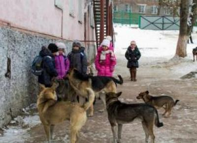 Многократные нападения бродячих собак зафиксированы в Шекснинском районе
