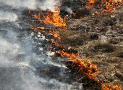 Объявлен оранжевый уровень пожарной опасности для Череповецкого района