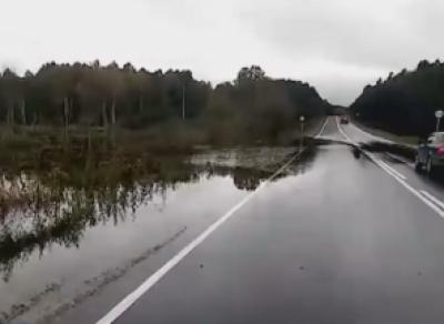 Бобры затопили трассу на Вологодчине?