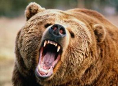 Медведь лишил ноги сотрудницу зоопарка