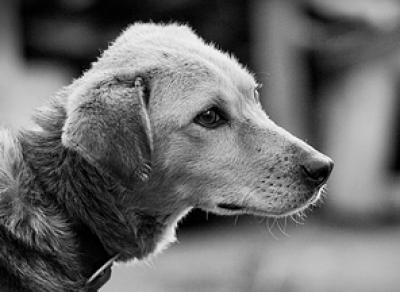 Вологжанин убил собаку, чтобы приготовить из нее шашлык