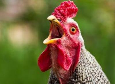 Куриное мясо и яйца стремительно дорожают