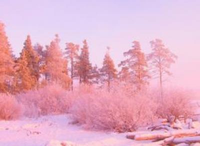 «Розовый» февраль ожидается на Вологодчине