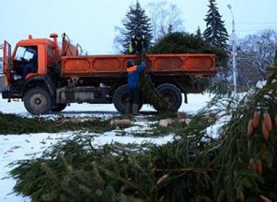 В областной столице начали увозить с площадей новогодние ели