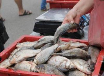30 кг рыбной продукции изъяли сотрудники вологодского Роспотребнадзора