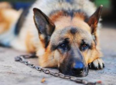 Мёртвых собак нашли в Вологде