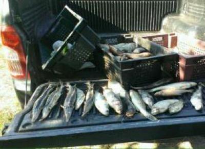 Бывший инспектор рыбохраны попросил в качестве «взятки» 300 кг налима