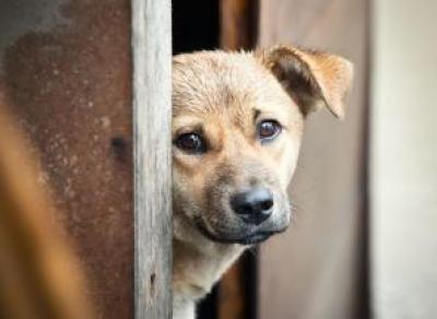 На Вологодчине начнут усыплять бездомных животных