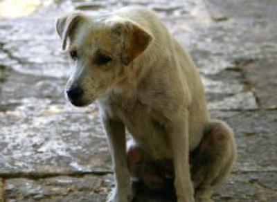 Экспертная лаборатория подтверждает – погибшие в Вологде собаки действительно были отравлены