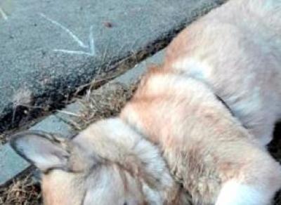 Вологжане обвиняют женщину в убийстве щенка