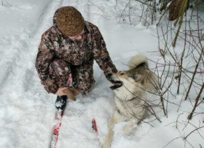 В Вологодском районе лихач на снегоходе сбил собаку