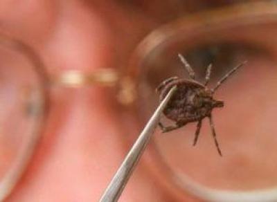 Более 95 тысяч доз вакцины от клещевого энцефалита закупит Вологодская область