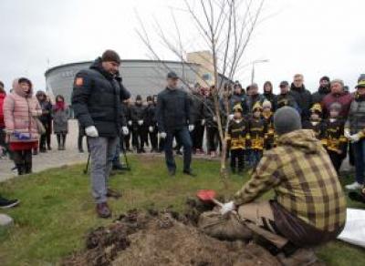 В Череповце хоккеисты высадили 25 взрослых вязов