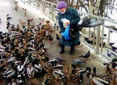 «Кормилица уток» найдена в Вологде