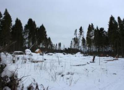 Часть Пуловского леса превратят в парк
