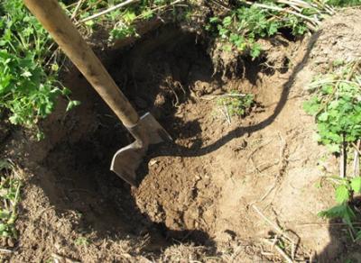 В Белозерске завистливый мурманчанин заколол и закопал коллегу