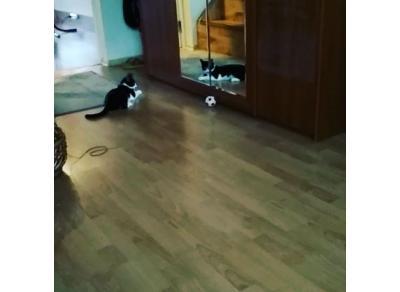 Котик-футболист