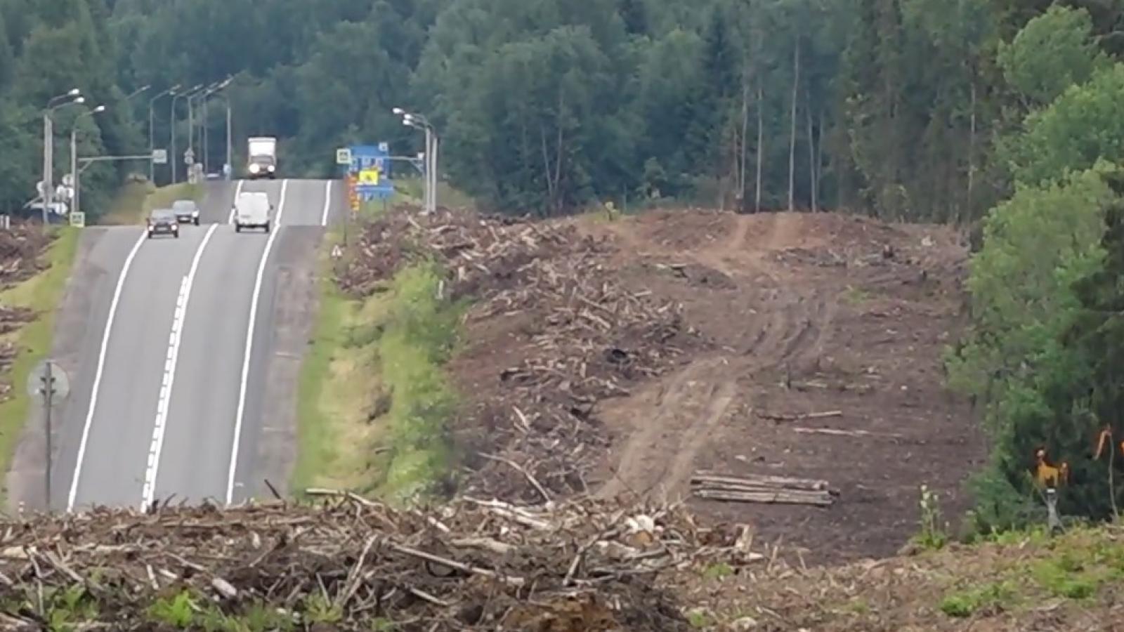 Трассу Вологда — Новая Ладога расширят до 4 полос