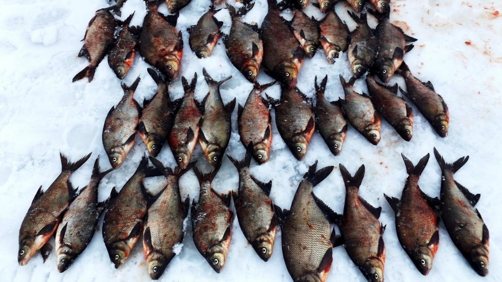 Трое череповчан были пойманы во время незаконной рыбалки